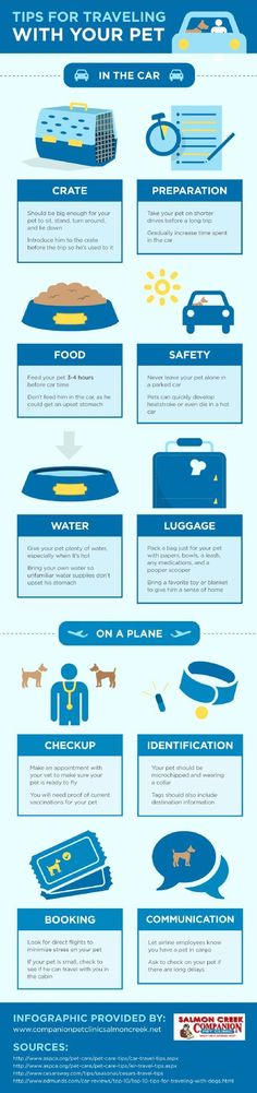 Tips for Traveling with Your Pet