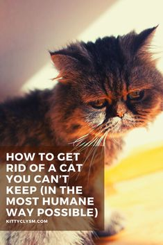 Behavioral Issues, Love Your Pet, Healthy Pets, Pet Care Tips, All About Cats, Cat Facts, Keep On, How To Get Rid, Cat Toys