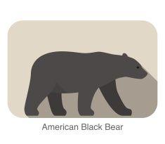 Urso-negro-americano A andar lado plana ícone design 3D vector art illustration