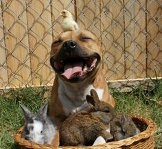 An adorable collection of pitties