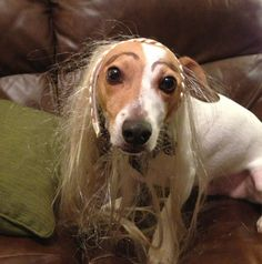 Latest Internet Trend: Dogs With Eyebrows