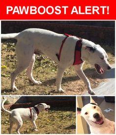 Please spread the word! Nemo was last seen in El Paso, TX 79936.    Nearest Address: Near Trawood Dr & Jerry Abbott St