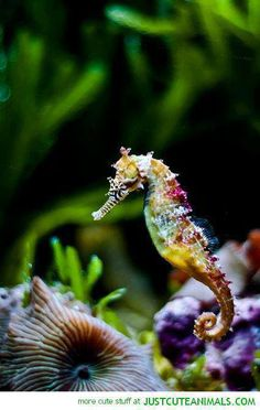 Tbh most of my favorite animals are water animals. Seahorses are one of them.