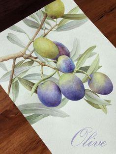 수채화-올리브(Olive) : 네이버 블로그 Watercolor Fruit, Watercolor Cards, Watercolour Painting, Watercolor Flowers, Fruits Drawing, Plant Drawing, Food Drawing, Beach Rock Art, Wreath Drawing