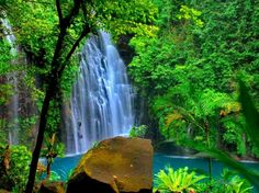 Forest fall - Waterfalls Wallpaper ID 1157700 - Desktop Nexus Nature