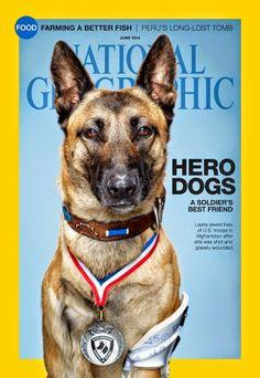 National Geographic en la edición de junio destaca el vínculo entre los perros militares y sus adiestradores contando alguna de sus historias a través de una serie de fotos.