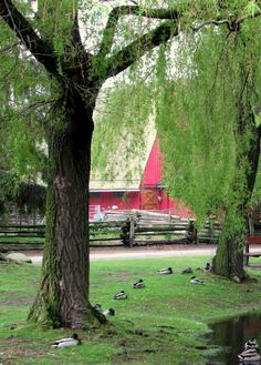 Weeping Willow, Barn  Ducks Country Farm, Country Life, Country Living, Country Roads, Weeping Willow, Country Scenes, Down On The Farm, Farms Living, Red Barns