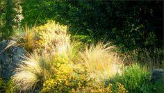 Gräser im Mai - Jahreszeiten - Galerie - Community