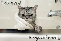 Kitty bath time