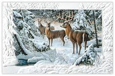 The Edge of Light - Deer from CardsDirect