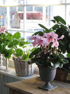 no Hulda Inneplanter Plants, Plant, Planets