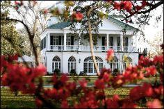 Lowndes Grove Plantation  http://www.pphgcharleston.com  Patrick Properties Hospitality Group   456 King Street    Charleston, South Carolina 29403    Office 843.853.0246    Fax 843.937.0406    Toll Free  877.307.9243    #Charleston #Wedding #Venue