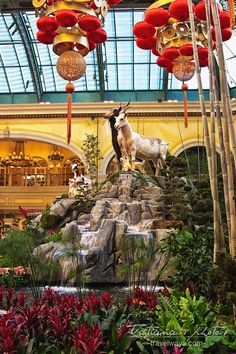 2015 Chinese New Year of the Goat Las Vegas at the Conservatory & Botanical Gardens at Bellagio 2015 Chinese New Year, Las Vegas Attractions, New Year Celebration, Conservatory, Botanical Gardens, Goats, Oriental, Collage, Decor Ideas