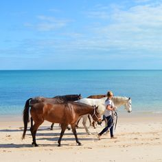 Les chevaux de randonnée se dégourdissent les pattes sur la plage #mozambique #afrique
