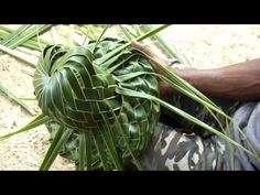 How to make a Coconut Palm Leaf Hat - Part 2 of Flax Weaving, Willow Weaving, Weaving Art, Basket Weaving, Palm Frond Art, Palm Fronds, Coconut Leaves, Leaf Projects, Leaf Crafts