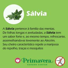 Sálvia