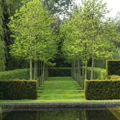 Linear hedge rows and lines of trees in lawn space create elegant and simple modern landscape with a lot of interest.