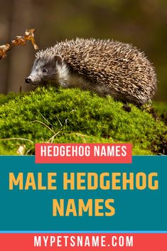 Are you a fan of the Hunger Games trilogy or your kids are? Why not name your hedgehog Heavnesbee, after Plutarch Heavensbee, the Head Gamemaker. Check out our list of male Hedgehog names for more options. Hedgehog Names, Hedgehog Pet, Shadow The Hedgehog, Ancient Egyptian Cities, Norse Names, Happy Names, Cute Nicknames, Great Names, Name List