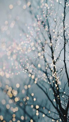 Winter photography - holiday fairy lights in trees, festive winter scene, fine . - Winter Photography – Holiday Fairy Lights in Trees, Festive Winter Scene, Fine Art Landscape Phot - Wallpaper Natal, Of Wallpaper, Winter Iphone Wallpaper, Sparkle Wallpaper, December Wallpaper Iphone, Wallpaper Ideas, Amazing Wallpaper Iphone, Cute I Phone Wallpaper, Iphone 7 Wallpaper Backgrounds