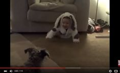 WHEN DOGS   BABIES COLLIDE   YouTube Baby Dogs, Babies, Youtube, Animals, Babys, Animales, Animaux, Puppies, Baby