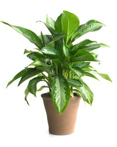 A digital camera can tell you all you need to know to grow happy, healthy indoor plants.