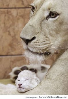 Lioness and her cub / Random Pictures Blog