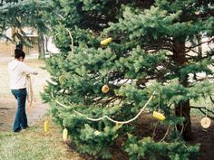 String popcorn, slices of apples, oranges, grapefruits, lemon, corn cobs, cranberries, blueberries, dried apricots, etc. and string them along trees for the wildlife in the wintertime.