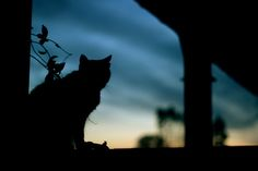 Night is coming Cute Baby Cats, Cute Cats And Kittens, Animals And Pets, Cute Animals, Serious Cat, Neko, Cat Comics, Pretty Sky, Landscape Wallpaper