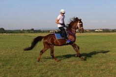awesome Horses, Lifestyle, Awesome, Animals, Animales, Animaux, Horse, Words, Animal