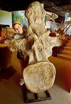 One argentinosaurus vertebrae! | In #China? Try www.importedFun.com for award winning #kid's #science |
