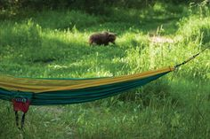 How To: 5 Bear Safety Tips | Eagles Nest Outfitters, Inc.