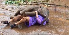 Слоненок захотел посидеть на коленях у туристки