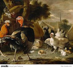 İngilizler hindiye 'Turkey Cock' (Türkiye Horozu) demeye başlamışlardı. Zamanla bu isim 'Turkey Coq' olarak kısaldı ve en sonunda da yalnızca 'Turkey' olarak kullanılmaya başlandı.