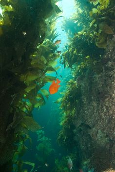 Catalina Island: The Jewel of Southern California Diving |