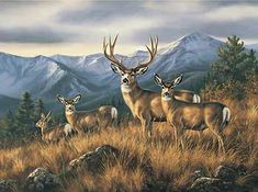 Crossing the Ridge-Mule Deer by Rosemary Millette : Wild Wings