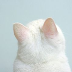 I just love how soft and round the backs of cats' heads are!