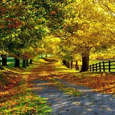 Thanks for visiting Beautiful Mother Nature. Beautiful World, Beautiful Places, Beautiful Pictures, Autumn Scenery, Fall Pictures, Belle Photo, Beautiful Landscapes, Autumn Leaves, Paths