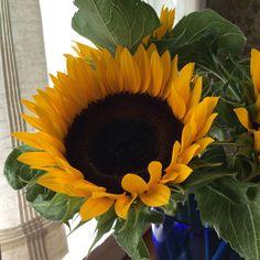sunflower photo by Alison Ellis