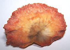 orange scolecite