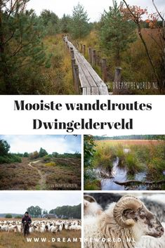 Places To Travel, Places To Visit, Photography Storytelling, Holland, Weekender, Road Trip Adventure, Walkabout, Weekends Away, Landscape Pictures