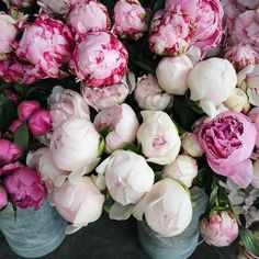 pink peonies ... one of my favorite flowers.