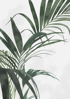 leaves – Best Garden Plants And Planting Green Plants, Tropical Plants, Aesthetic Backgrounds, Aesthetic Wallpapers, Cute Wallpapers, Wallpaper Backgrounds, Pastell Wallpaper, Plant Background, Plant Wallpaper