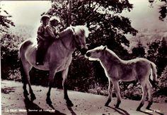 Sommer på Vestlandet- med 2 barn og hester Mittet & Co