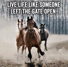 Living life - Horses Funny - Funny Horse Meme - - Living life The post Living life appeared first on Gag Dad. Funny Horses, Cute Horses, Horse Love, Beautiful Horses, Inspirational Horse Quotes, Cowboy Quotes, Horse Sayings, Cowgirl Quote, Rodeo Quotes
