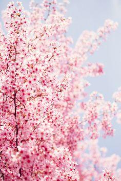 Spring flowers......