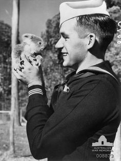 Men of the USS Northampton and USS Salt Lake City were welcomed as friends by all sections of the community when their ships visited Brisbane. Arthur Mercer, from the USS Salt Lake City, was among the party of men who visited an animal sanctuary near Brisbane. He made the acquaintance of Rata, a baby koala. Australia: Queensland, Brisbane. c July 1941.