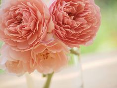 Warm, sweet, deeply pretty blooms to start Thursday off on a lovely note. #flowers #pink #vase #nature #wedding