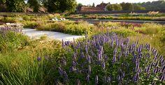 Wiltshire garden designed by Tom Stuart Smith  Photo by Allan Pollok-Morris