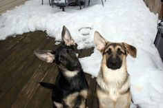 Lexa and Nico