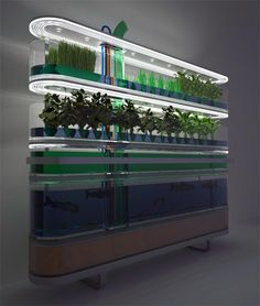 biosphere... I dont know how we could do this but it is an awsome way to have herbs and fishes!